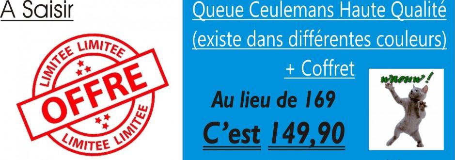 Bannière Ceulemans 2